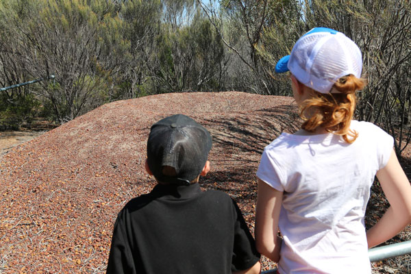 Kids viewing the Malleefowl Nest Holland Track