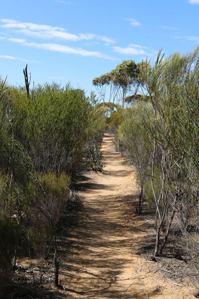 Walking track to the Malleefowl Nest Holland Track